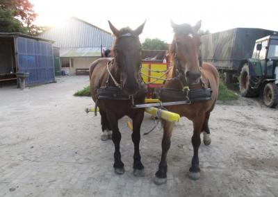 WattwagenPferde